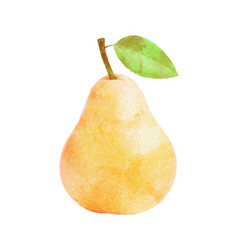 Watercolor pear fruit with leaf on white vector