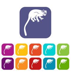 Marmoset monkey icons set flat vector