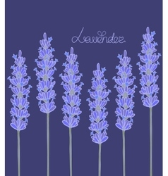 Dark lavender background vector