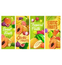 Fresh tropical fruits cartoon banners set vector