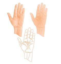 Human left hand pointer stop vector