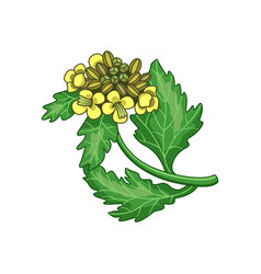 Mustard spice realistic colored botanical vector