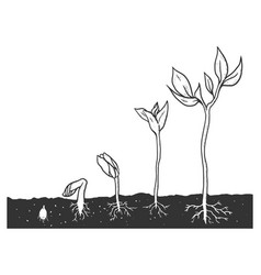 plant growth stages set sketch engraving vector image