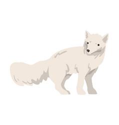Polar fox arctic animal wild north mammal cartoon vector