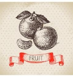 Hand drawn sketch fruit mandarin Eco food vector image vector image