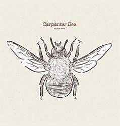 Carpenter bee vintage engraved vector