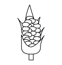 Corncob icon outline style vector image