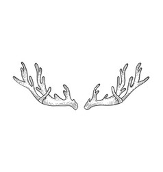 deer horns sketch engraving vector image