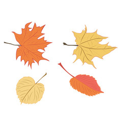 fall leaves set vector image