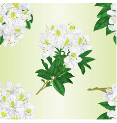 Seamless texture branch white flowers vector