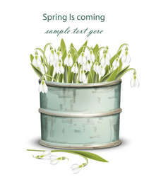 snowdrops bouquet spring card realistic vector image