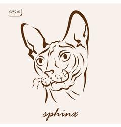 sphinx cat vector image
