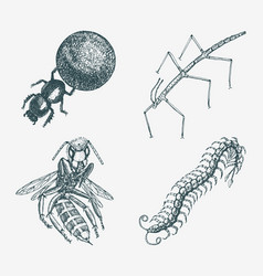 stick and bee and scolopendra and earth-boring vector image