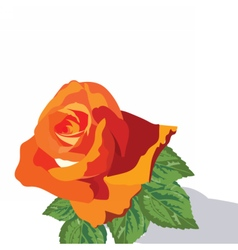 Watercolor Rose isolated on white vector image