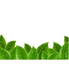 green leaves border vector image