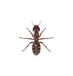 Ant on white background vector
