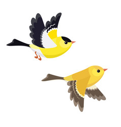Flying american goldfinch pair isolated on white vector