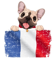 French bulldog fan vector