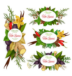 Spices herbs vegetable and plant seasonings vector