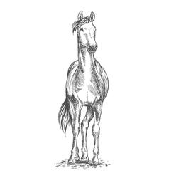 Standing horse sketch portrait vector
