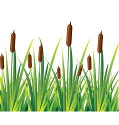 Swamp canes water reed plant cattails green leaf vector