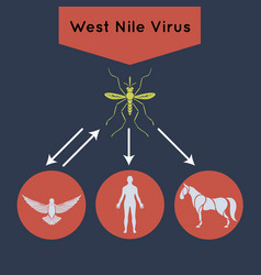 West nile virus icon vector