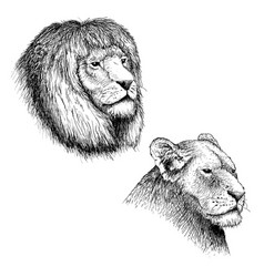 head of lion and lioness vector image vector image