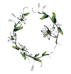 Passiflora white wreath vector image vector image