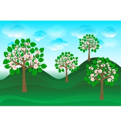 Blossoming cherry trees on a green lawn vector image