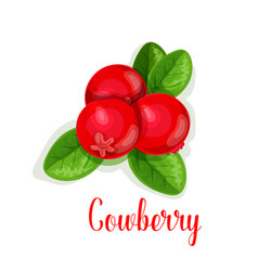 cowberry berry isolated icon vector image