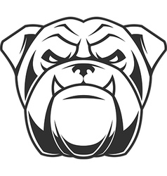 Head of a fierce bulldog vector