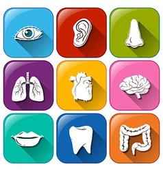 Organ icons vector image