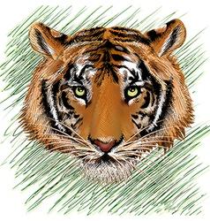 The tiger sketch vector