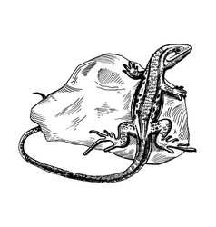 Lizard on stone engraving vector