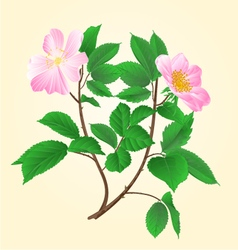 Wild roses twig leaves and flowers vector