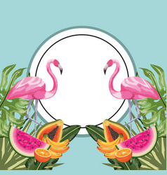 Circle sticker with flamingo and tropical fruits vector