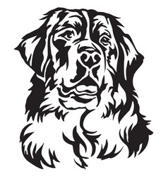 Decorative portrait of bernese mountain dog vector