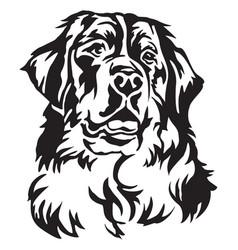 decorative portrait of bernese mountain dog vector image