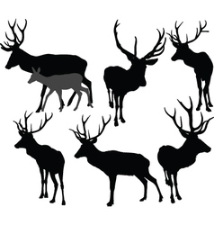 deer collection 2 - vector image