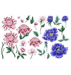 seamless pattern of chrysanthemum and peonies vector image