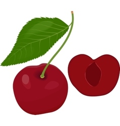 Ripe red cherry berries with leaves vector image