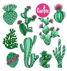Color cactus set vector image