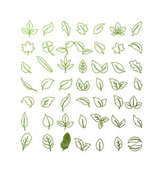 set isolated green leaves icons on white backgr vector image