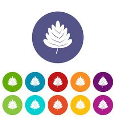 oak leaf icons set flat vector image