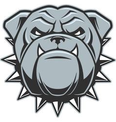 The head of a fierce bulldog vector image vector image