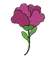 beautiful rose decoration icon vector image