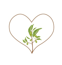 Chick Peas Plant in A Heart Shape Frame vector