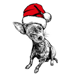 dog in santa stocking hat santa claus christmas vector image