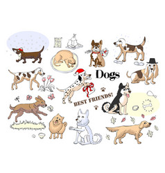 funny dogs sketches vector image