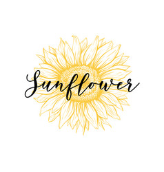 Sunflower yellow hand drawn ink pen vector